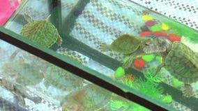 Little green turtle stock footage