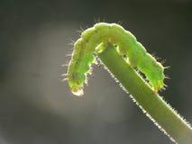 Little green worm stock photo