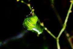 Little green worn