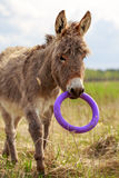 Little Grey donkey. With toy Stock Images