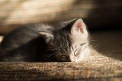 Little grey kitten dreaming on sofa. Indoor Royalty Free Stock Photo