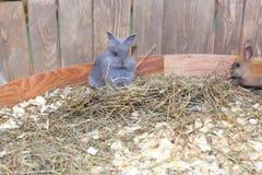 Little grey rabbit Stock Images