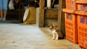 Little Grey stray kitten sitting on the ground at night street market. Thailand stock video