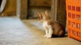 Little Grey stray kitten sitting on the ground at night street market. Thailand stock video footage