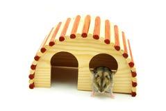 Little hamster Stock Images