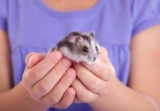 Little hamster in children's hands. Little gray hamster in children hands Royalty Free Stock Photos