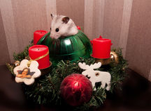 Little hamster in christmas tree Royalty Free Stock Photos