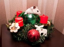 Little hamster in christmas tree Stock Photo