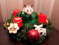 Little hamster in christmas tree Stock Photos