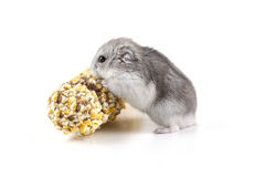 Little hamster eating Stock Photography