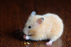 Little hamster straw colored Stock Photos