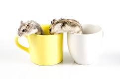 Little hamsters  going out Royalty Free Stock Images