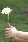 Little hand holding flower. Both little hands holding flower, yellow carnation Stock Photos