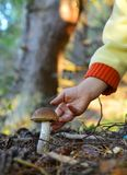 Little hand  and mushroom Royalty Free Stock Images