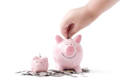 Little hand put coin to piggy bank isolated Stock Photography