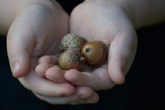Child holding acorns Royalty Free Stock Image