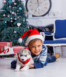 Little handsome boy sitting with Husky puppies Royalty Free Stock Photography