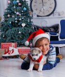 Little handsome boy sitting with Husky puppies Stock Photos