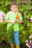 Little happy boy is eating carrots in a garden Stock Photography