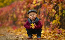 Little happy child boy sits in park and holds yellow leaf in his. Little happy child boy wearing hat, scarf and sweater sits in park and holds yellow leaf in his stock photo