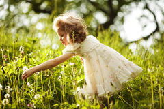 Little happy curly girl collects dandelions Royalty Free Stock Photos