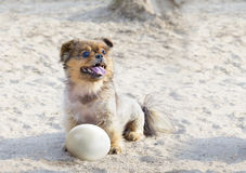 Little happy dog with ostrich egg Stock Image
