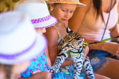 Little happy girl with cute tiny cub at the zoo Royalty Free Stock Photography