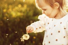 Little happy girl with a dandelion royalty free stock image