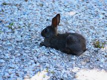 Little hare in a shadow... stock image