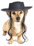 Little hat dog. A israel rabbin dog and hat Royalty Free Stock Photo