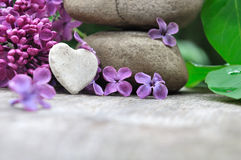 Little heart and lilac Stock Photo
