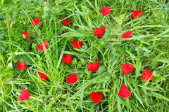 Little hearts in a meadow Stock Image