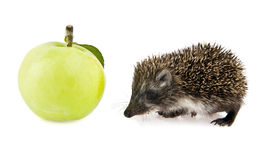Little hedgehog and apple Royalty Free Stock Images