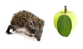 Little hedgehog and apple Stock Photo