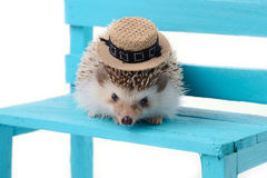 Little hedgehog on bluse chair Royalty Free Stock Images
