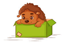 Little hedgehog in a box. On a white background Stock Photography