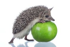 Little hedgehog and green apple isolate on white stock photography