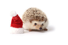 Little hedgehog with red santa claus hat. Stock Image