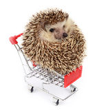 Little hedgehog and shopping cart. Royalty Free Stock Photos
