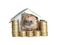 Little hedgehog sitting in the house of money isolated Stock Photos