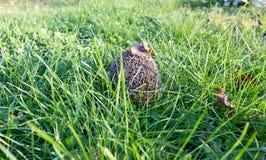 Little hedgehog Stock Photo