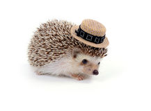 Little hedgehog. Stock Image