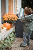 Little helper in the garden. Autumn scenery with pumpkins. A little boy is watering flower stock images