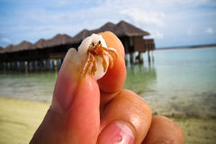 Little hermit crab in hand Stock Photos