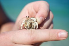 Little hermit crab Stock Image