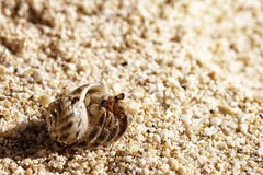 Little hermit crabs Stock Photography