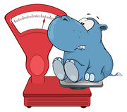 A little hippo and a weighing scale. Cartoon Stock Photography