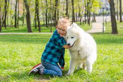Little hipster boy in glasses hugging white fluffy samoyed dog and laughing in the park on the grass stock images
