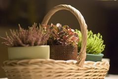 Little home garden Royalty Free Stock Photography