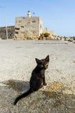Little homeless cat Stock Images